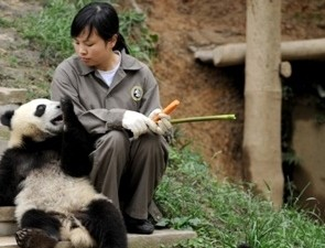 One Day Tour to Huanglongxi Ancient Town & Chengdu Research Base of Giant Panda Breeding