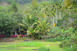 This is yanuoda tropical rain forest of sanya, picturesque, tropical paradise